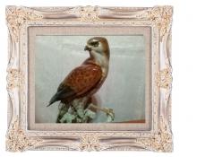 Фарфоровые статуэтки птиц, Фарфоровые птицы, фигурки птиц фарфор