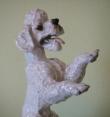 фарфор, статуэтка фарфоровая пудель, белый пудель, пудель фарфоровый, собака фарфоровая,  Фриц Хайденрайх (Fritz Heidenreich), Розенталь (Rosenthal).
