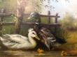 купить картину утки , картон, масло,  картины маслом, купить картину утки, пейзаж, утки на озере, утки